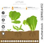 lettuce beneficial features... | Shutterstock .eps vector #1289816452
