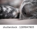 close up of english setter... | Shutterstock . vector #1289847805