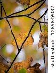 beech tree leaves close up | Shutterstock . vector #1289849032