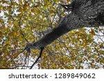 beech tree leaves close up | Shutterstock . vector #1289849062