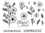 vector illustration of tropical ... | Shutterstock .eps vector #1289862235