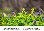 closeup green flower wall... | Shutterstock . vector #1289967052