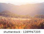 closeup mountain prairie with... | Shutterstock . vector #1289967205