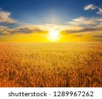beautiful summer rural wheat... | Shutterstock . vector #1289967262