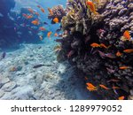 coral reef in eilat diving and... | Shutterstock . vector #1289979052