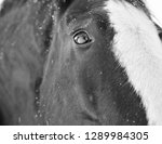 Black And White Closeup Of A...