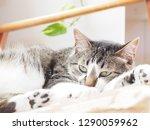 cat lying on the sofa   Shutterstock . vector #1290059962
