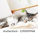 cat lying on the sofa   Shutterstock . vector #1290059968