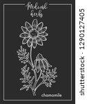 chamomile flower medical herb... | Shutterstock .eps vector #1290127405