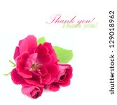 Beautiful  Red Rose Flowers with leaves isolated on white background with copy space - stock photo