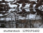winter trees reflected in the... | Shutterstock . vector #1290191602