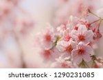 close up of someiyoshino cherry ... | Shutterstock . vector #1290231085