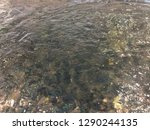 clear water and mosaic   image | Shutterstock . vector #1290244135