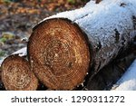 Woodpile In Lumber Forest...