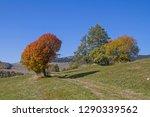 Magnificent Autumn Colored...