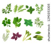 herbs and spices. oregano green ... | Shutterstock .eps vector #1290353305