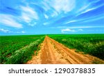 summer rural country road... | Shutterstock . vector #1290378835