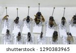 insects bees  flies  wasps in... | Shutterstock . vector #1290383965