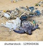 Dead Turtle Entangled In...