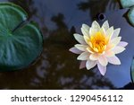 Water Lily Lotus Flower Leaf...