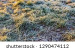 closeup of frosted blades of...   Shutterstock . vector #1290474112