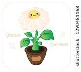 camomile  daisy flower vector.... | Shutterstock .eps vector #1290481168