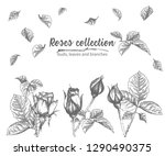 set of hand drawn sketch roses  ... | Shutterstock .eps vector #1290490375
