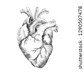 anatomical heart black and... | Shutterstock .eps vector #1290507478