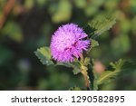 beautiful violet colour flower | Shutterstock . vector #1290582895