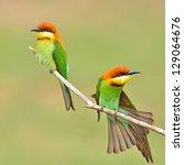 couple of bee eater bird | Shutterstock . vector #129064676