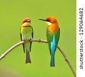 Stock photo couple of bee eater bird 129064682
