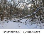 nice winter scene in deep forest | Shutterstock . vector #1290648295