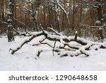 landscape with old dead tree in ... | Shutterstock . vector #1290648658