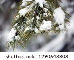 nice pine twig under snow | Shutterstock . vector #1290648808