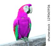 colorful macaw bird | Shutterstock . vector #129065936
