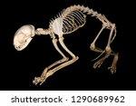 isolated domestic cat  felis... | Shutterstock . vector #1290689962