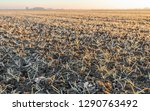 large field with small winter...   Shutterstock . vector #1290763492