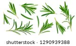 Rosemary Twig And Leaves...