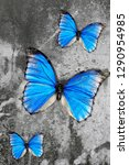Blue Common Morpho Butterfly O...