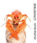 crawfish with dried fish... | Shutterstock . vector #1290987808