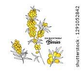 sea buckthorn branches hand... | Shutterstock .eps vector #1291052842