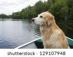 golden retriever enjoying a... | Shutterstock . vector #129107948