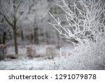 edge of the woods with frozen...   Shutterstock . vector #1291079878