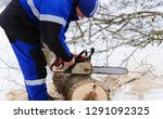 close up of woodcutter sawing... | Shutterstock . vector #1291092325