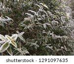 wonderful garden hedge with...   Shutterstock . vector #1291097635