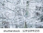 ice storm beauty | Shutterstock . vector #1291099255