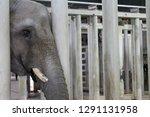Sad Elephant Behind Bars.  Image