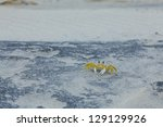 soft-shell crab on the sand - stock photo