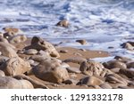 pebbles on the shore. stones in ...   Shutterstock . vector #1291332178