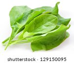 Sorrel Isolated On White...
